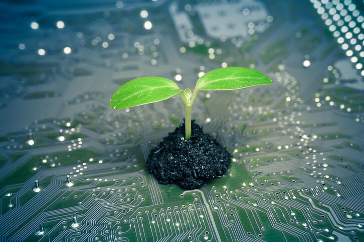 tree-growing-on-a-computer-circuit-board